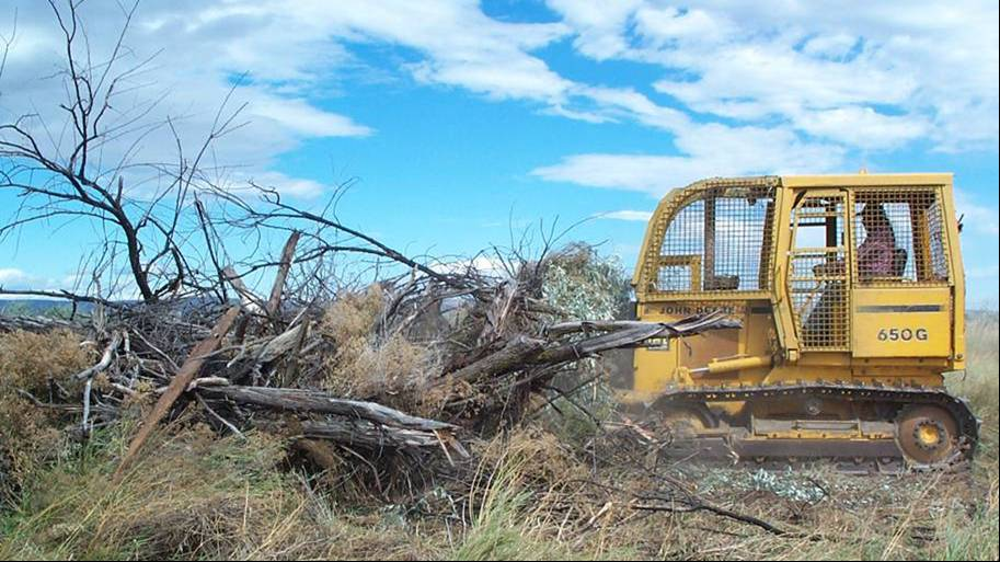 SWA russian olive removal