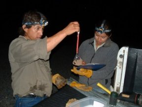 Weighing a bat, picture by M. Nuetzmann