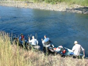 Removal of Japanese knotweed on Naches River, picture by F. Canapo