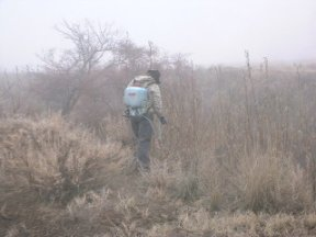 Spraying of Russian olive sprouting after mechanical removal in the Satus Wildlife Area, picture by A. Williams